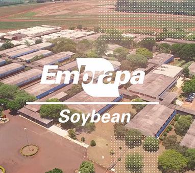 Vídeo Embrapa Soybean